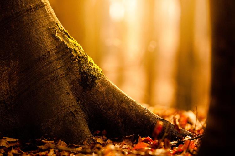 """Article réalisé par Fabien : """"Au pied d'un arbre""""."""